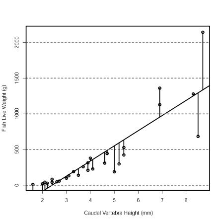 Fish Live Weight and Vertebra Height Scatterplot with Linear Model