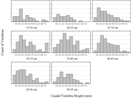 Histograms of Caudal Vertebra Height (mm) by Level from the Midden Deposit